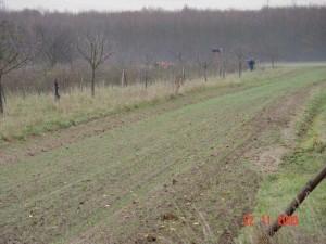Pflanzung Feldhecke