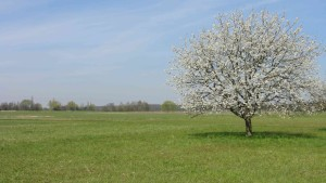 Wiesenflächen Saalbachniederung